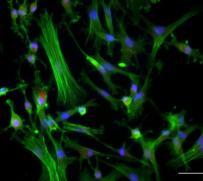 Rapid Stem Cell Expansion 2